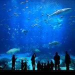 Du lịch Nha Trang – Đà Lạt 5 Ngày khởi hành Sài Gòn