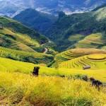 Du lịch Sapa – Hàm Rồng – Cát Cát 2 ngày giá rẻ