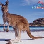 Du lịch Australia: Sydney – Canberra – Melbourne 7 ngày  6 đêm