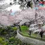 Du Lịch: Hà Nội – Hàn Quốc 7 ngày 6 đêm