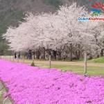 Du lịch Nhật: Đài Bắc – Cố Cung – Osaka – Kyoto – Phú Sĩ – Ashi – Owakudani – Tokyo