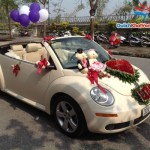Cho thuê xe cưới mui trần Volkswagen