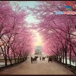 Du lịch Nhật Bản:  Kobe – Osaka – Kyoto 5 ngày 4 đêm