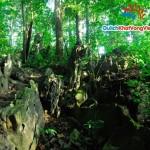 Du lịch sinh viên: Hà Nội-Cúc Phương 2 ngày giá rẻ
