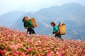 nhiều loài hoa đượ nhập khẩu từ pháp và nhật
