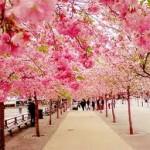 Tìm hiểu khi đi du lịch Nhật Bản