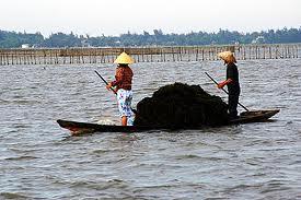 Phá Tam Giang, Thừa Thiên Huế