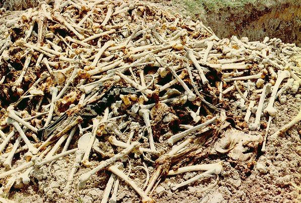 Du lịch Cánh đồng chết ở Campuchia