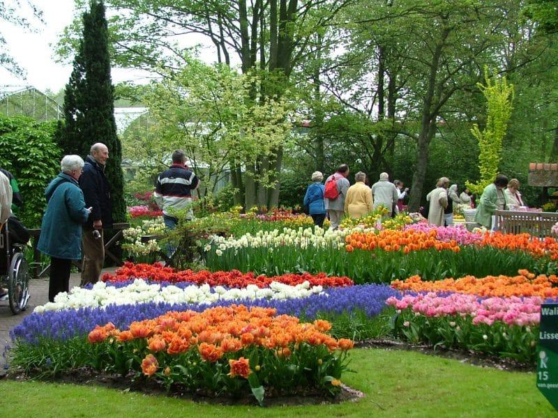 Hoa Đà Lạt đa dạng, đủ sắc màu