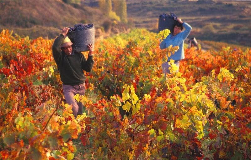 Mendoza – Vùng đất với những ly rượu vang tuyệt vời của đất nước Argentina