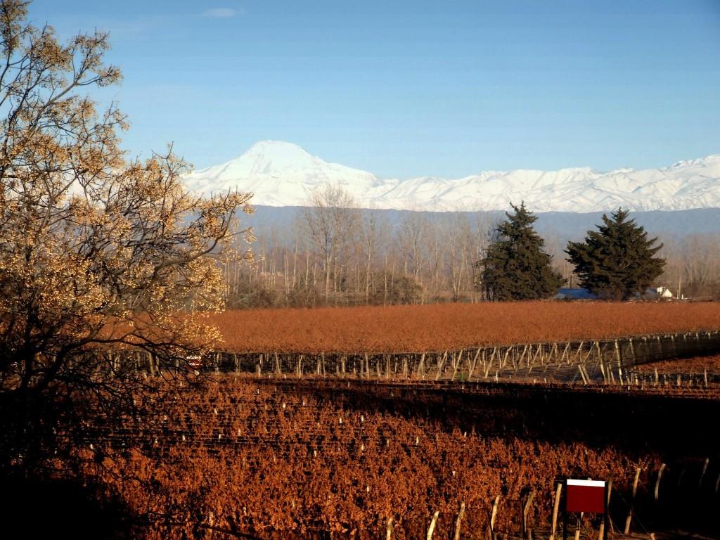 Mendoza-vùng đất rượu vang