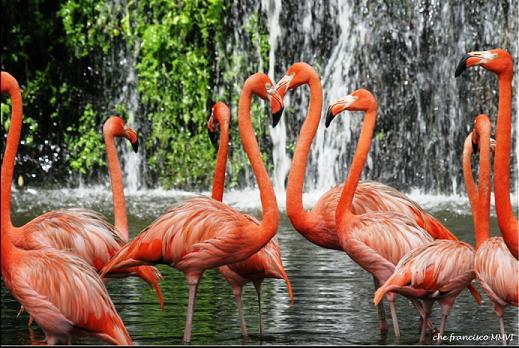 Thích thú với những chú chim tại vườn chim JuFong Singapore
