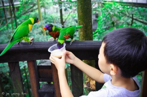 Thiên đường chim Jurong
