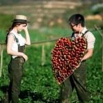 Đà Lạt – địa điểm du lịch tuyệt vời cho valentine