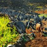 Đồng văn- công viên địa chất toàn cầu.