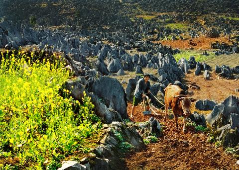 Ảnh chụp 1 góc nhỏ của cao nguyên đá Đồng Văn.