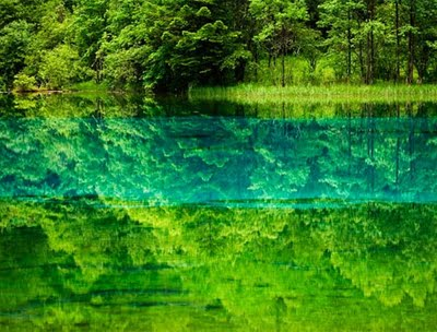 mặt nước và rừng cây xanh.