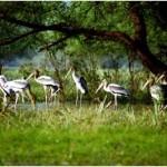 Vườn quốc gia Keoladeo.