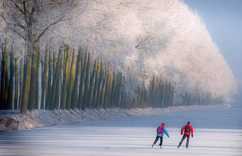 tuyết phủ trắng cả rừng cây.
