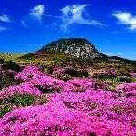 Ghé thăm đảo Jeju, Hàn Quốc.