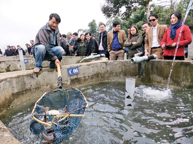 Các du khách thích thú khi được tham quan cơ sở nuôi cá hồi ở Sapa