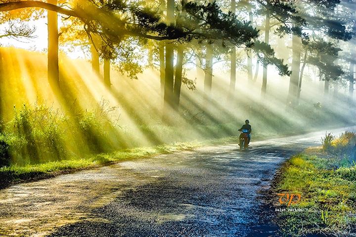 Buổi sáng trên đồi thông