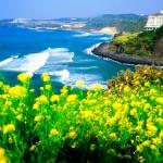 HÀ NỘI – SEOUL – NAMI – JEJU – EVERLAND – CÔNG VIÊN HOA ANH ĐÀO 6N5Đ