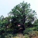 Chùa Hương Tích – Ngôi chùa giữa núi rừng Hà Tĩnh