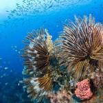 Khám phá vẻ đẹp san hô ở vùng biển Cát Bà