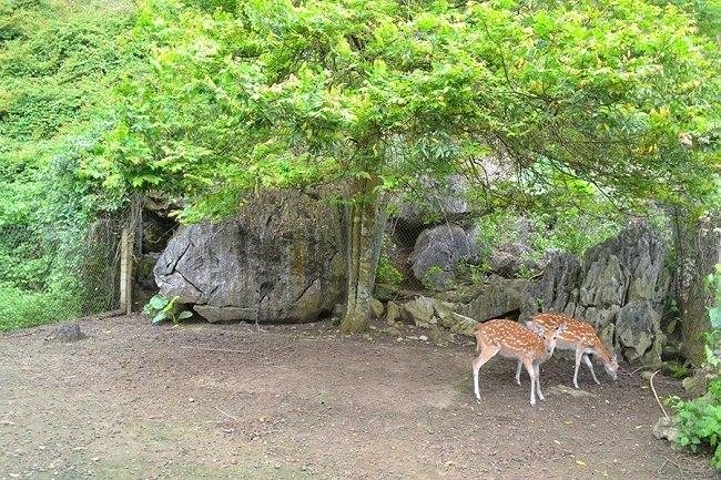 Những chú hươu nai ngẩn ngơ dưới gốc cây