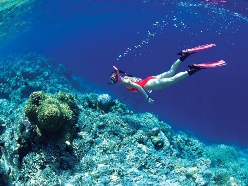 Lặn ngắm san hô, trải nghiệm không nên bỏ lỡ khi du lịch Cát Bà