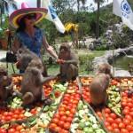 Du lịch Nha Trang khám phá lễ hội hoa quả sơn ở Đảo Khỉ