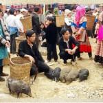 """Lợn """" cắp nách"""" đặc sản nên thưởng thức khi du lịch Sapa."""
