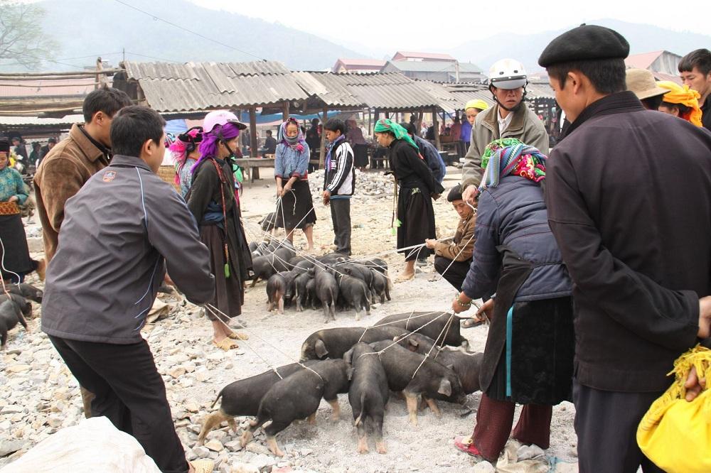Đến các chợ phiên ở Lao Cai, du khách dễ dàng bắt gặp hình ảnh người dân bày bán lợn cắp nách