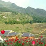 Thung Lũng Hoa Hồng Đẹp Tuyệt Sắc.