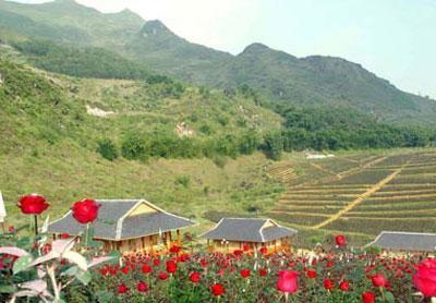 Thung Lũng Hoa Hồng.