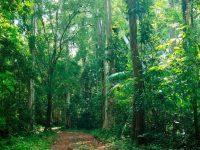 Khu sinh thái Cát Bà là viên ngọc sáng của vùng đất Hải Phòng.