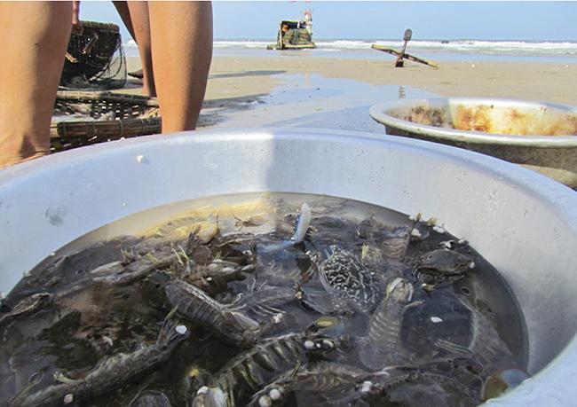 Hải sản biển Hải Hòa