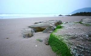Bãi biển Hoành Sơn Hà Tinh