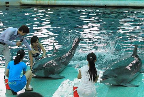 Tới du lịch Tuần Châu xem xiếc cá heo