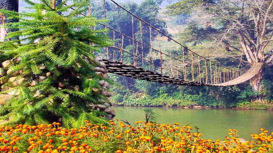 Cầu mây bắc qua dòng suối Hoa thơ mộng