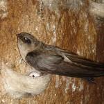 Tìm hiểu về loài chim yến ở khu du lịch Nha Trang