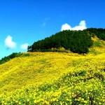 Đi du lịch Đà Lạt mùa nào đẹp nhất?