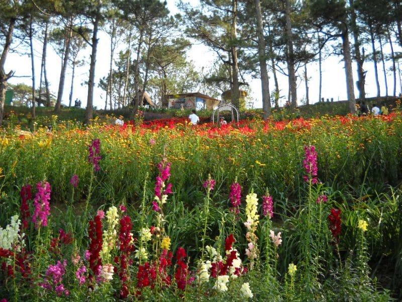 Các loại hoa khoe sắc tại Thung Lũng Tình Yêu Đà Lạt