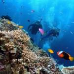 Du lịch Nha Trang lặn biển