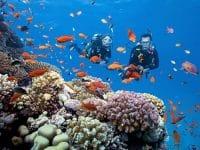Những rặng san hô thu hút rất nhiều khách du lịch