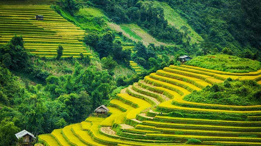 Ruộng bậc thang tuyệt đẹp tại thung lũng Mường Hoa