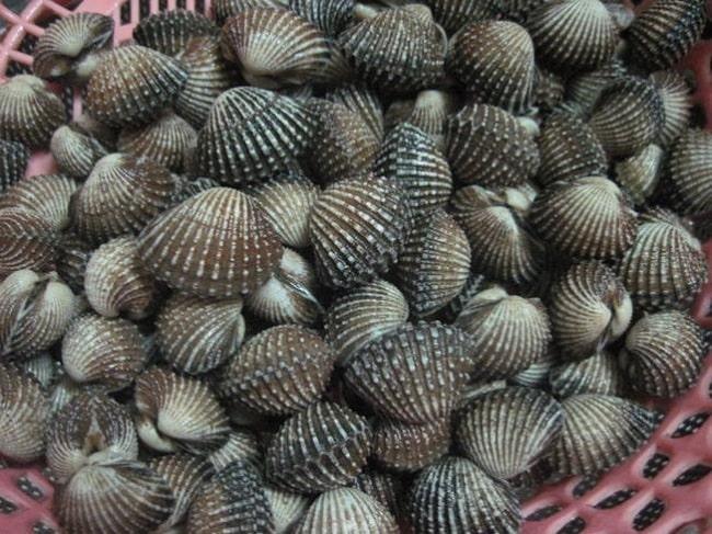Du lịch Hải Hòa thưởng thức các món ăn ngon từ sò huyết.