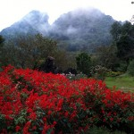 Du lịch Sapa – Thung lũng hoa hồng