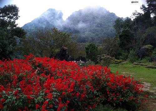 Du lịch Sapa - Thung lũng Hoa Hồng